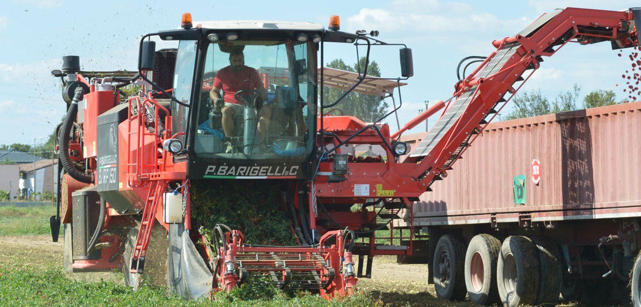 Rubroprod: Colhedoras de tomate automotrizes P. Barigelli & C